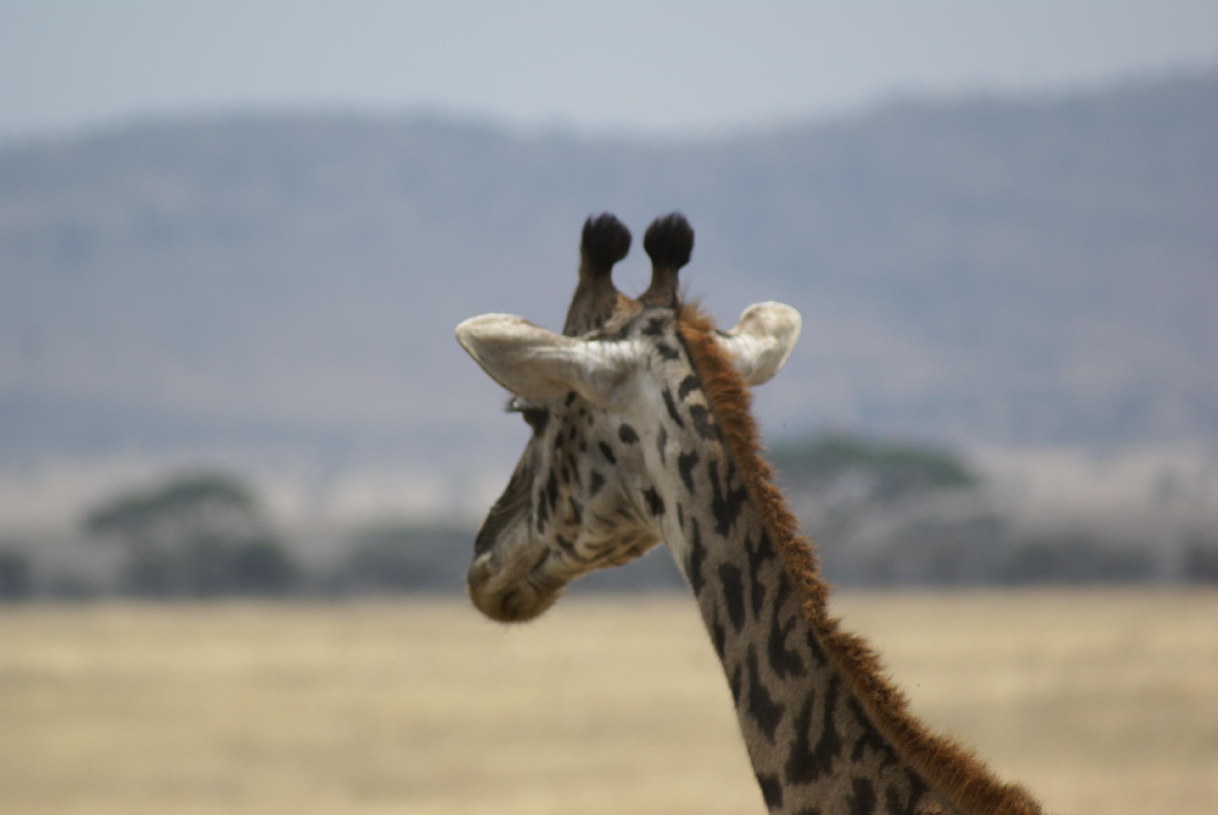 viatge tanzania família
